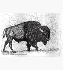 Buffalo Pen & Ink Scribble Drawing Poster