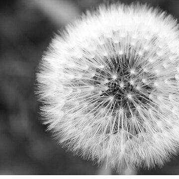 Seed Ball by daverach1