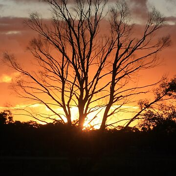 sunset in trees by daverach1