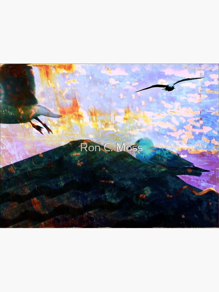 City Gulls by ronmoss