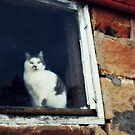 barn cat in winter by Lynne Prestebak