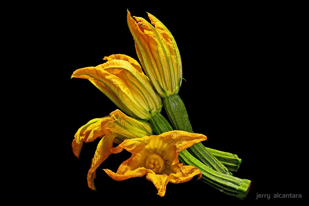Zucchine Flowers by jerry  alcantara