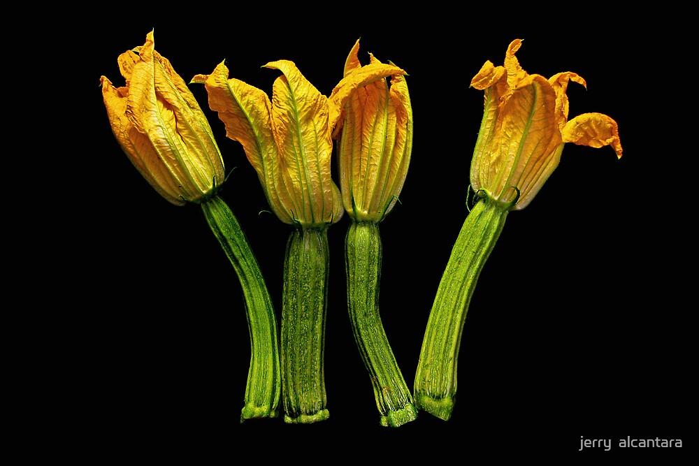 zucchini flower II by jerry  alcantara