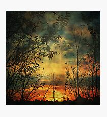 Last Light of Day Photographic Print