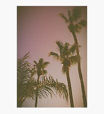 Retro Style California Palm Trees at Sunset Photographic Print