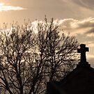 Morning Light by Cordelia