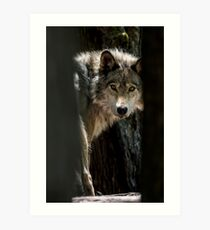 Wolf In Forest Art Print
