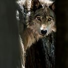 Wolf In Forest by Michael Cummings