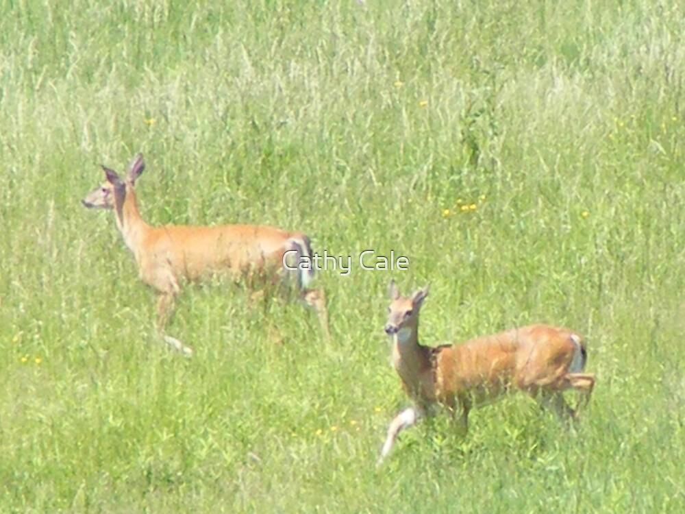 Deer 2 by Cathy Cale