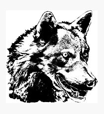 Wolf Painting Stickers Photographic Print