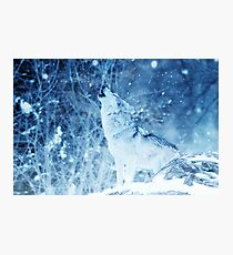 Lonely Wolf in the ice Phone Cover Photographic Print