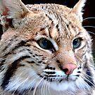 Eyes of a Lynx   402 Views by Rosalie Scanlon
