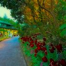 Butchart Gardens at Night 3 by Deri Dority