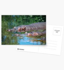 three happy hippos Postcards