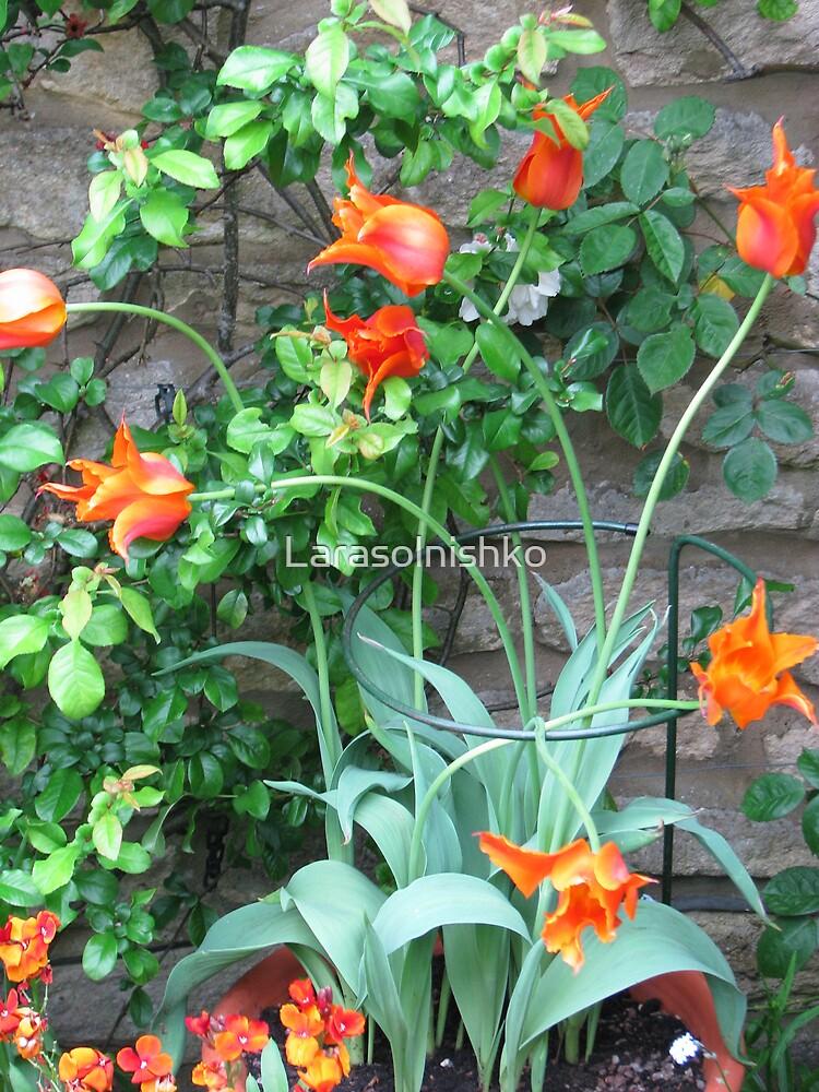 Tulips with fire flames by Larasolnishko