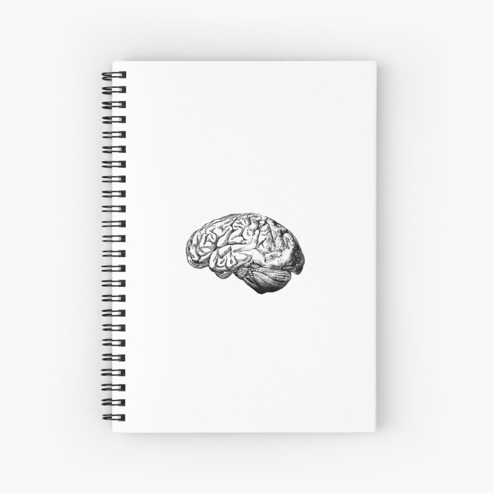 Anatomie des Gehirns Spiralblock