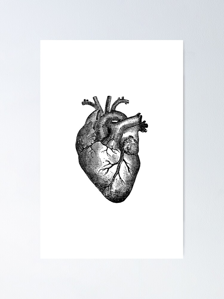 Alternate view of Vintage Heart Anatomy Poster