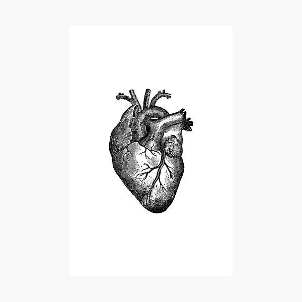 Anatomie du coeur vintage Impression photo