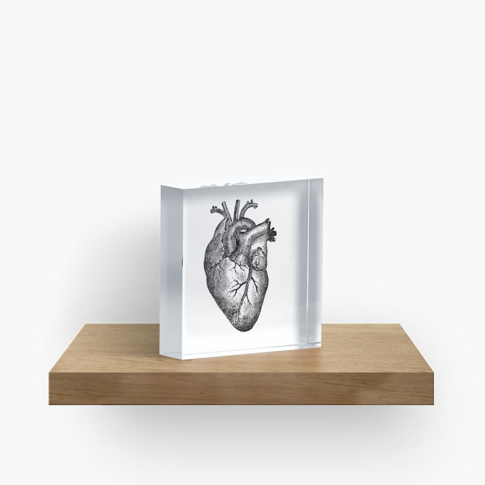 Vintage Heart Anatomy Acrylic Block