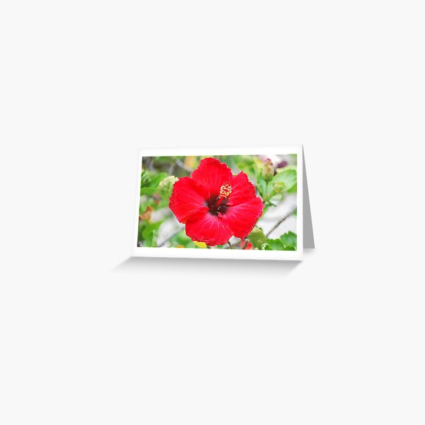 Red In The Sun Greeting Card