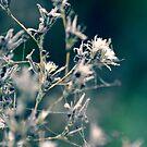 Cotton Forest by James McKenzie