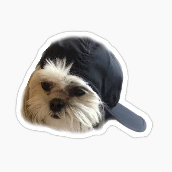 Shihpoo with Hat Sticker