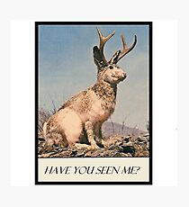 Jackalope - Have You Seen Me? Photographic Print