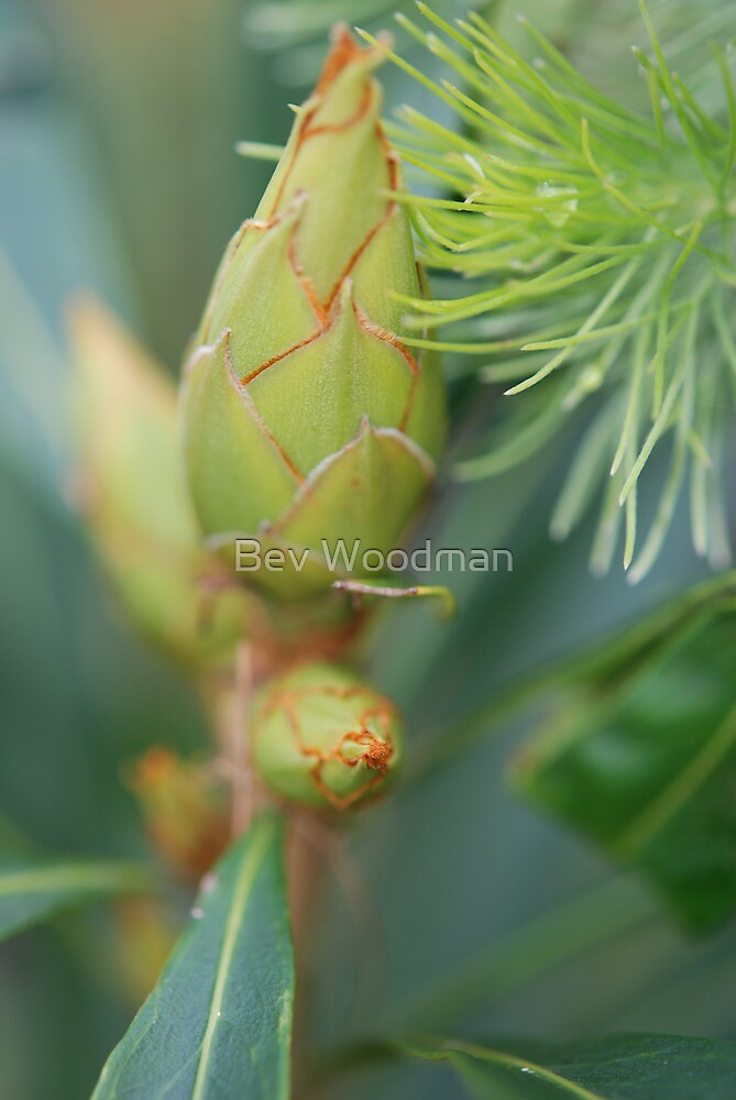 A New Bud to New Life by Bev Woodman