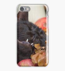 black cat on old barrel iPhone Case/Skin