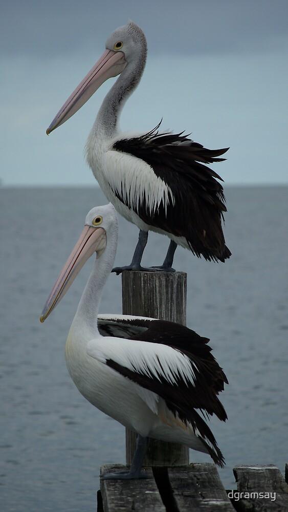 Pelican 7 by dgramsay