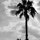 «Palmeras en blanco y negro» de by-jwp