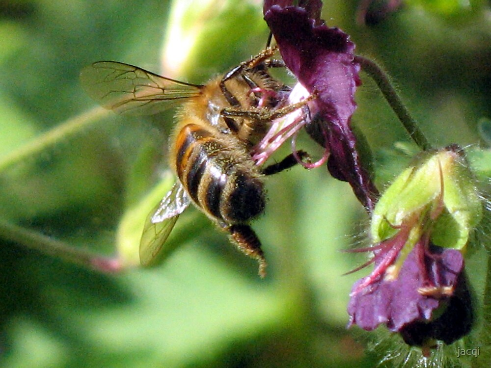 Dratted Pollen Gets Everywhere by jacqi