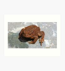Common Toad (Bufo bufo) Art Print