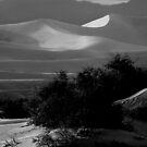 Across The Dunes by Varinia   - Globalphotos