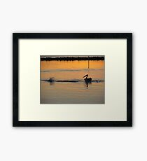 Mullet Splash Framed Print