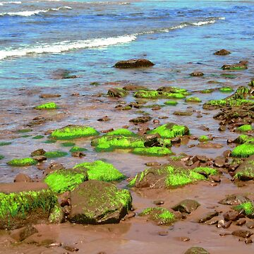 Seaweed on the rocks - Greenwich Beach, PEI, Canada by Shulie1