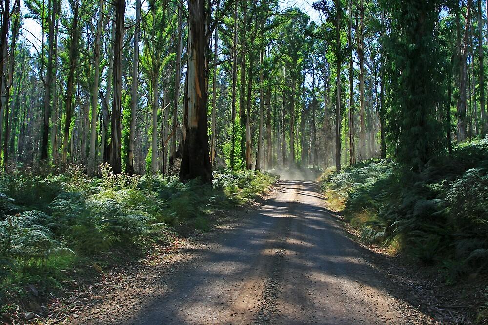 Rejuvenating forest  by Andrew Klym