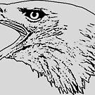 American Bald Eagle by CentipedeNation