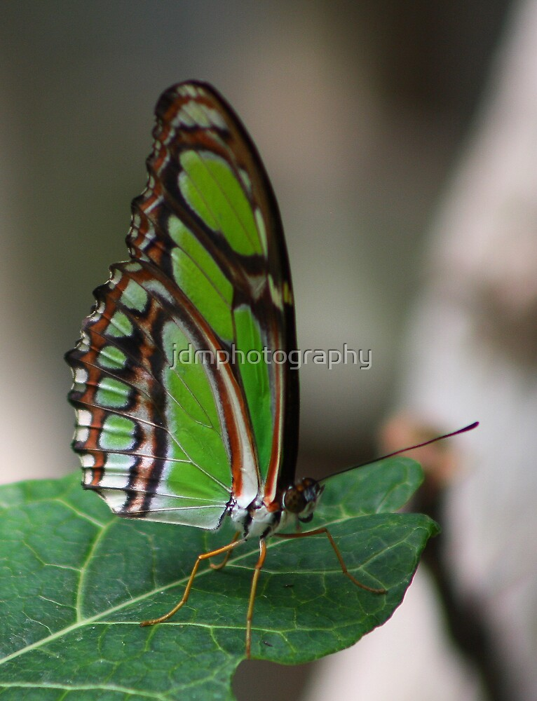 Mint Green by jdmphotography