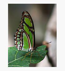 Mint Green Photographic Print