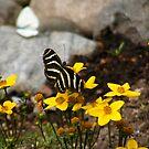Butterflies are Free by Jennifer Vickers