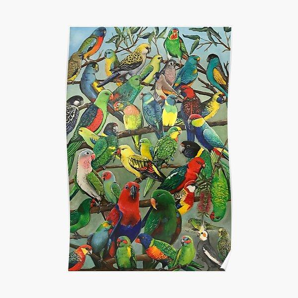 Australian Parakeets Poster