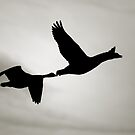 Geese in Silhouette by Bob Wall