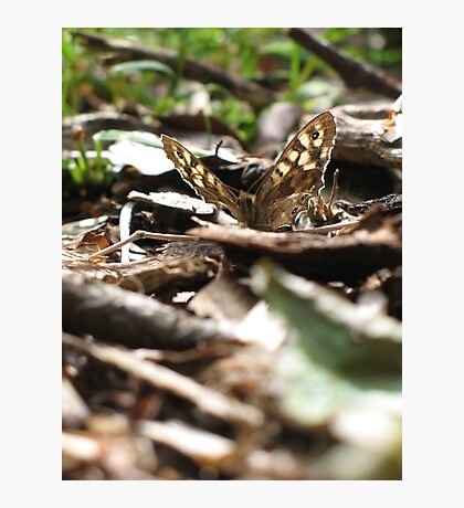 Speckled Wood Photographic Print