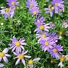 Pretty in Purple by WanderingBajans