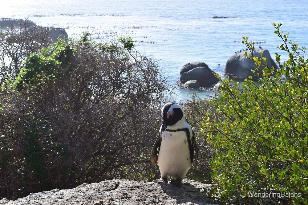 Boulders Beach Penguin by WanderingBajans