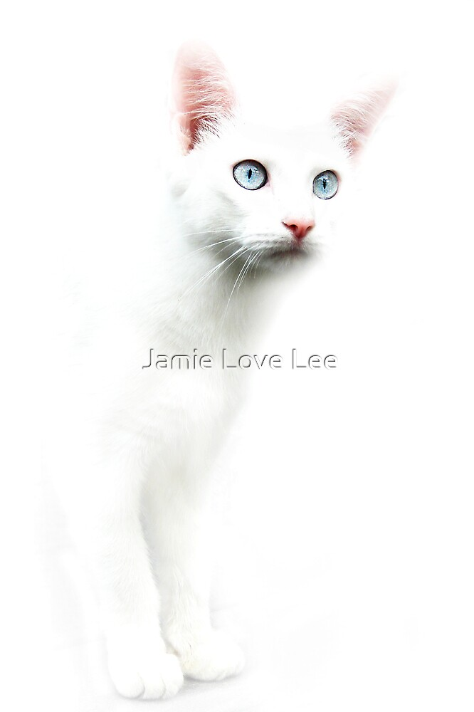Baby Blues by Jamie Lee