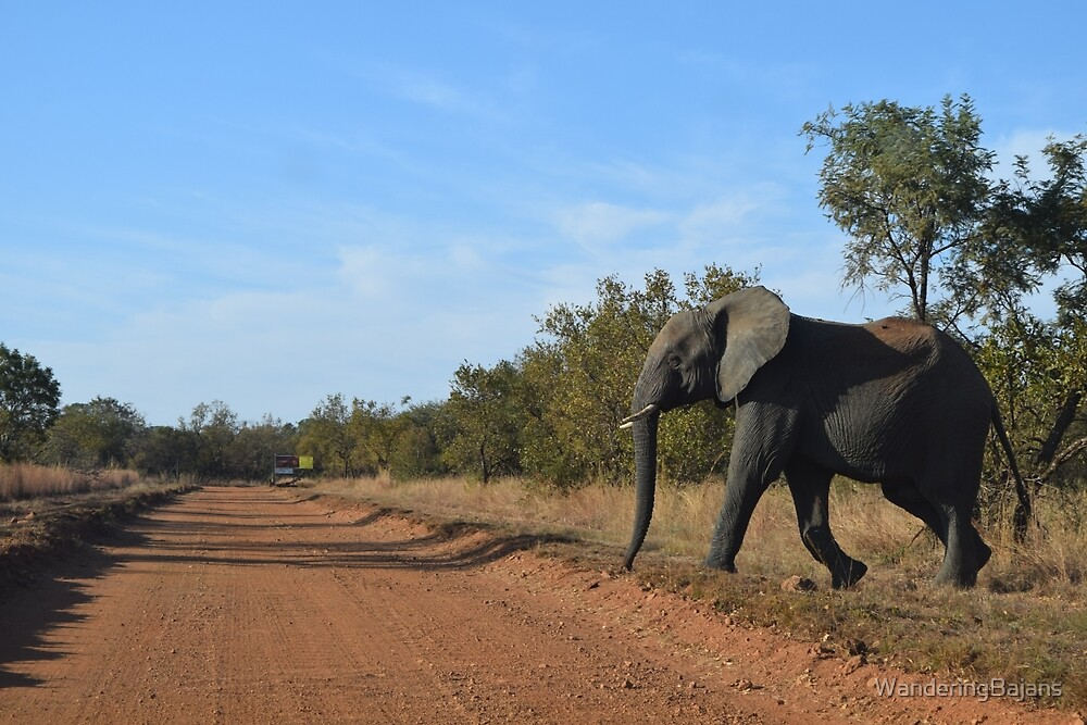 Elephant in the Wild by WanderingBajans