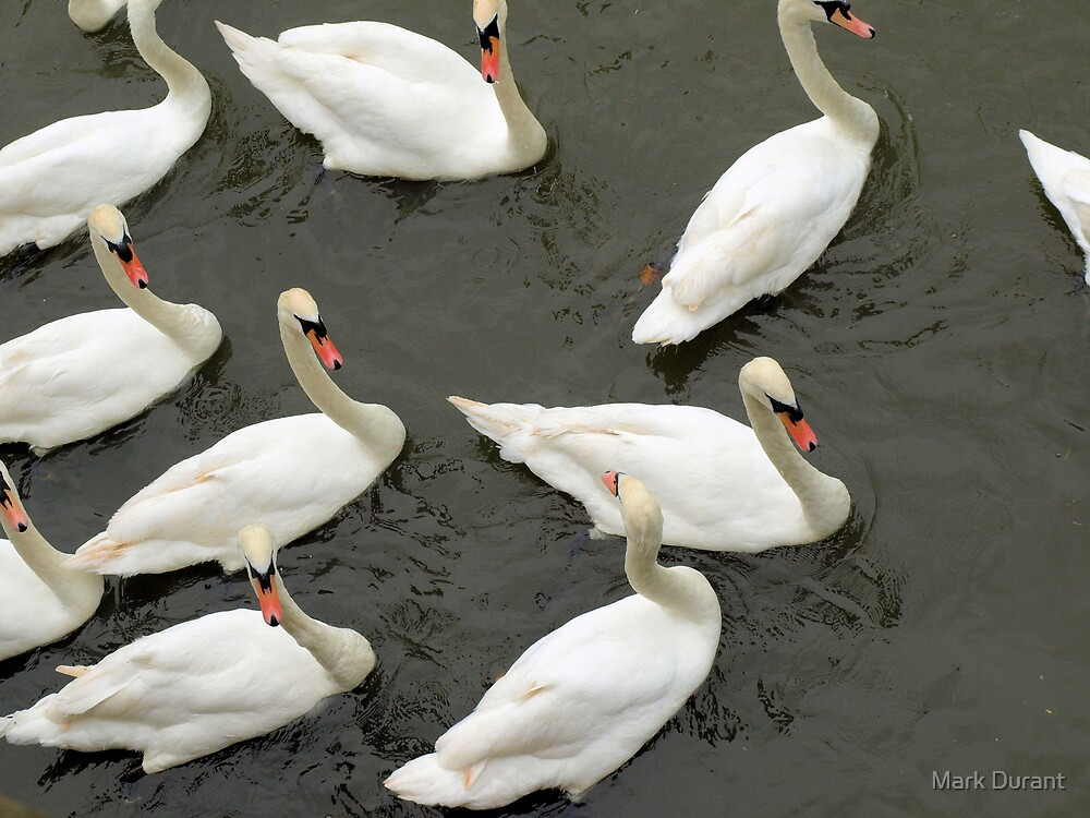 Swans of Stratford  by Mark Durant