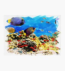 Beautiful Coral Reef Photographic Print